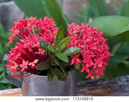 Ixora , Spike Is A Plant That Needs Full Sun.