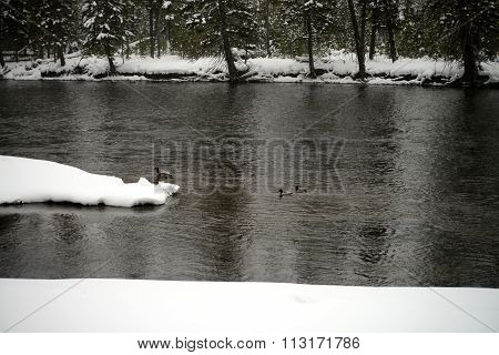 Madison River Yellowstone Winter Snow