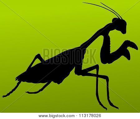 animal mantis silhouette vector illustration