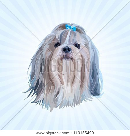 Shih tzu dog portrait in blue colors