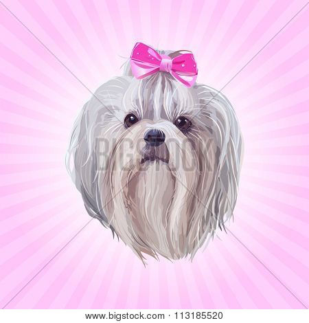 Shih tzu dog portrait in pink colors