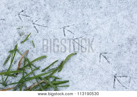 Bird Tracks On Snow