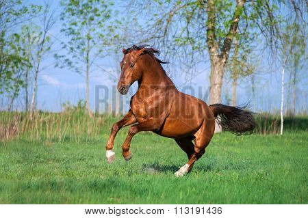 A beautiful red horse galloping across a green field against the sky