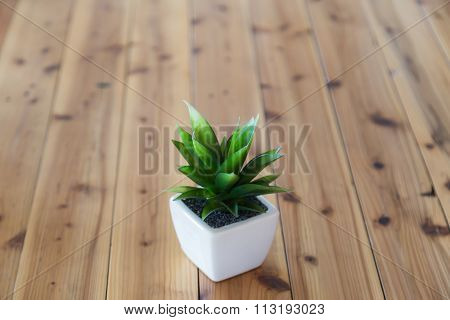 Tree Wearing White Pot