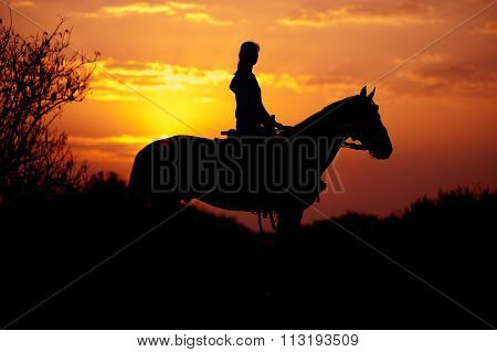 Silhouette of a rider and horse on a background of sunrise or sunset.