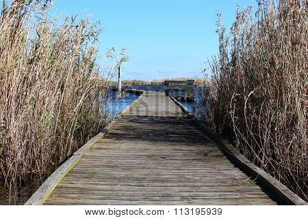 Marsh boardwalk between grass