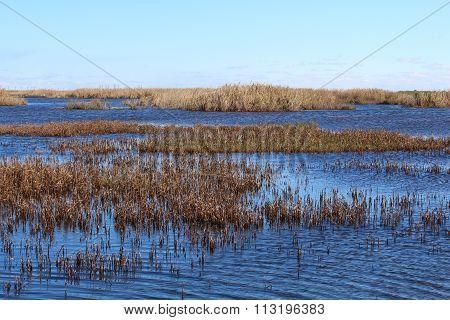 Salt marsh under blue sky