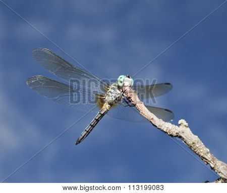 Dragonfly Above
