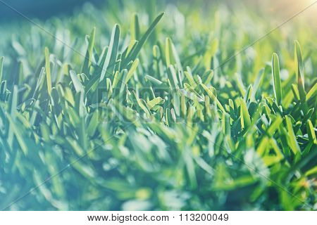 Vintage style background, cinematic look photo of a green grass field in sunlight, old fade effect,  shallow dof, natural dreamy image