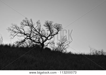 Silhouette of a winter tree