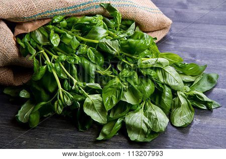 Fresh Basilic Leaves On A Wooden Table