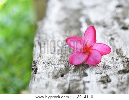 Pink Plumeria On The Wood Background