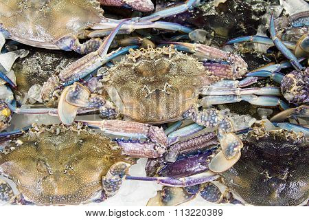 Fresh raw flower or blue crab in sedfood market