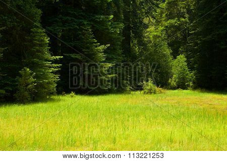 Grassy green meadow