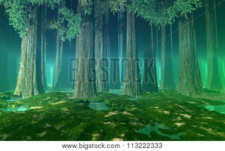 Huge trees green misty forest