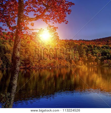Stunning fall foliage and lake in Vermont, USA. Focus is on the foreground tree.
