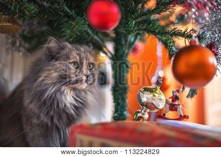 Cute Cat Playing With The Toys Under The Christmas Tree