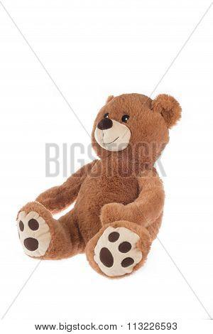 Brown Teddy Bear, Isolated