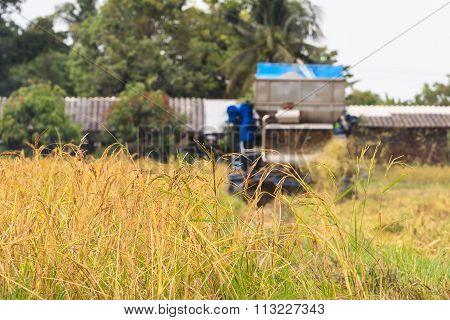 Combine Harvester Harvesting Rice.