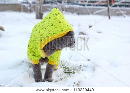cat walks on snow