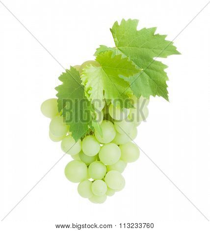Bunch of white grapes with leaves. Isolated on white background