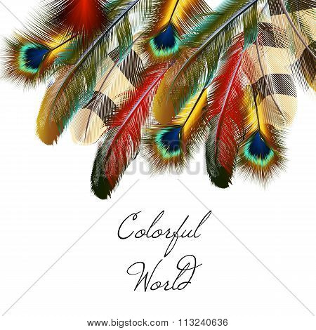 Art Background With Feathers Symbol Of Colorful World