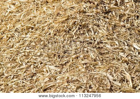 Corn Husks Dry - Corn Crumb Crust In A Corn Field