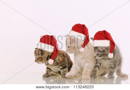 Three Adorable Furry Kittens Interested In Something On White Background