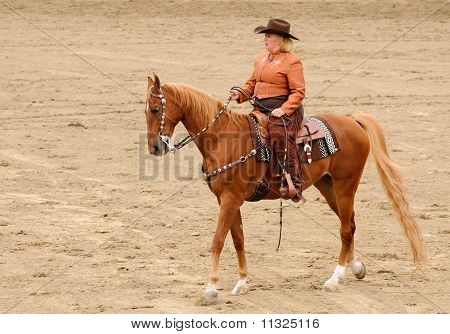 Western Tack On A Saddlebred