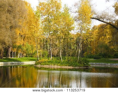 Autumn landscape island with yellow trees on pond in park recorded in park Sokolniki in Moscow.