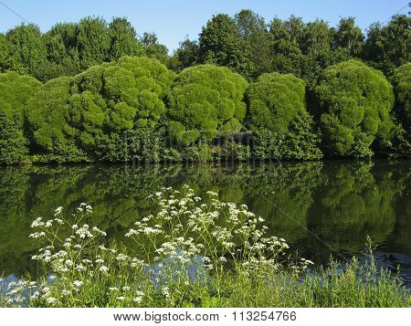 Summer landscape with lake and willow trees on bank recorded in Izmaylovskiy park in Moscow.