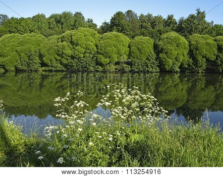 Lake With Trees With Reflection