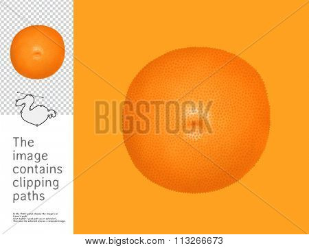 The illustration of an orange.  A part of Dodo collection - a set of educational cards for children. The image has clipping paths and you can cut the image from the background.