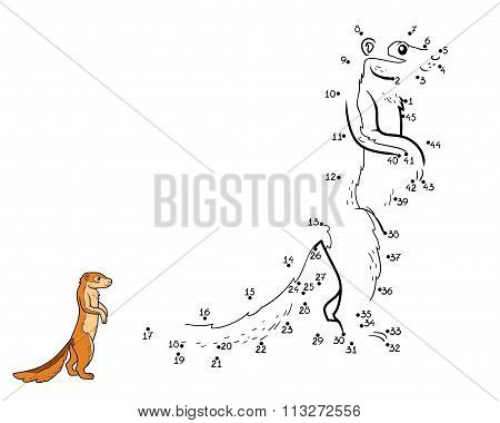 Numbers Game, Game For Children (ground Squirrel, Xerus)