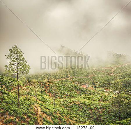 Tea plantations near Nuwara Eliya. Sri Lanka.