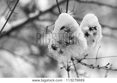 Dry bushy plant under the snow