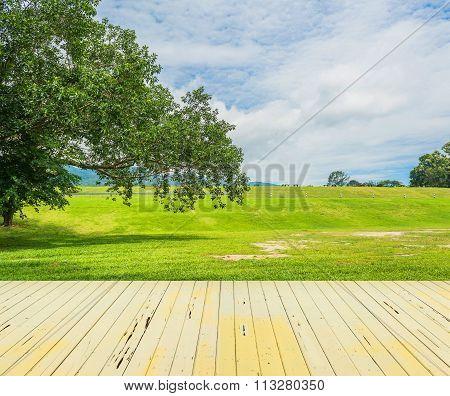 Big Green Tree And Blue Sky