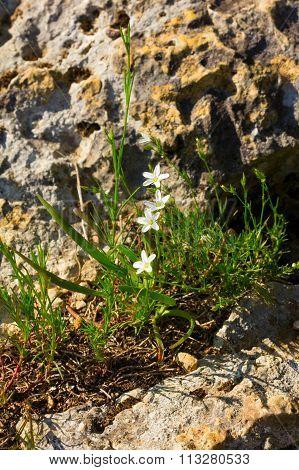 White spring wild flowers