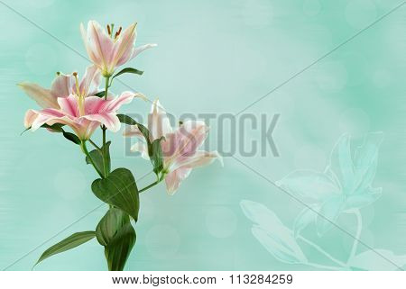 Lily photo on bright turquoise background with a delicate lily drawing in the corner
