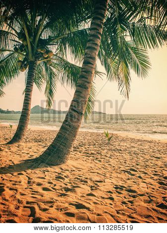 Coconut tree on the beach in Koh Samui Thailand