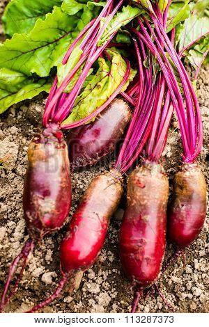 Beetroots On The Ground