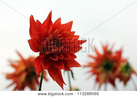 Magic red flowers