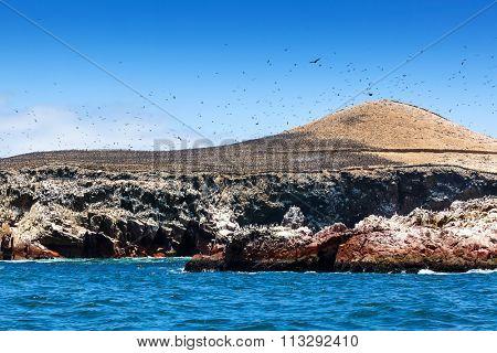 colony of cormorants on the island
