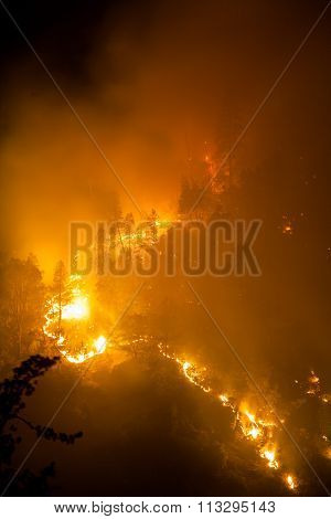 Forest fire at night