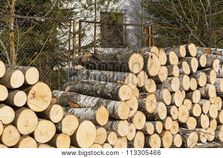 Felling of the forest accumulated felling of the tree trunks. Wood for fuel and for fireplaces.
