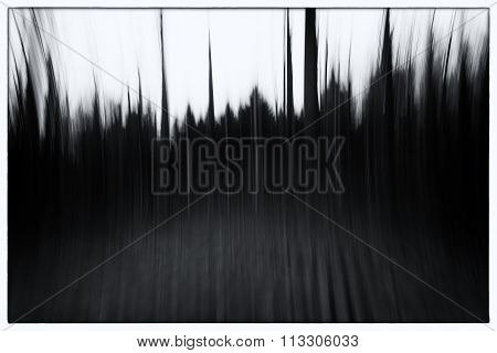A Black And White Photo Of A Conceptual Photo Using Slow Shutter Speed Of Trees In A Forest Showing