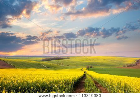 Yellow flowering fields, ground road and beautiful valley, nature spring landscape