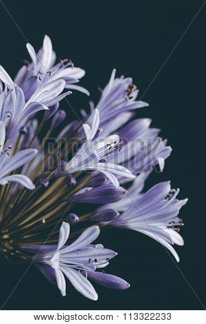 Beautiful Blue Flower Closeup Retro Style