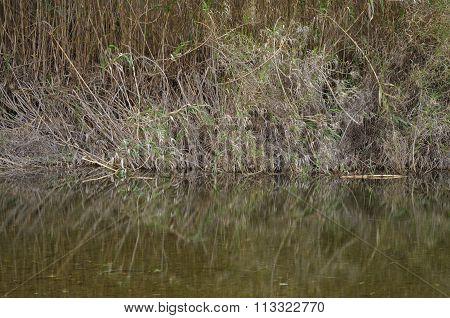 Zen creek and bamboos