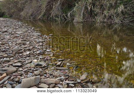 Creek, bamboos and pebbles
